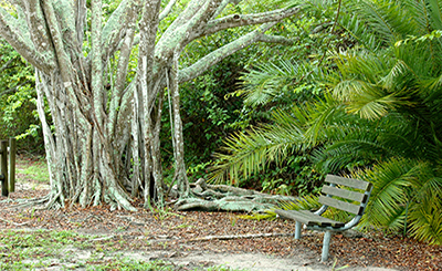 Banyan Tree and other poems